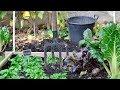 Garten für Faule: Zeit sparen mit Sträuchern und Hochbeeten
